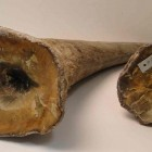 Raw rhino horns smuggled by the ring in or about April 2011
