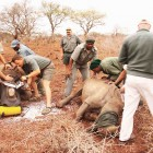 iSimangaliso Wetland Park decided to start translocating rhinos after an aerial survey showed they were in poor condition